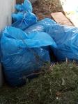 pytle v bioodpadu